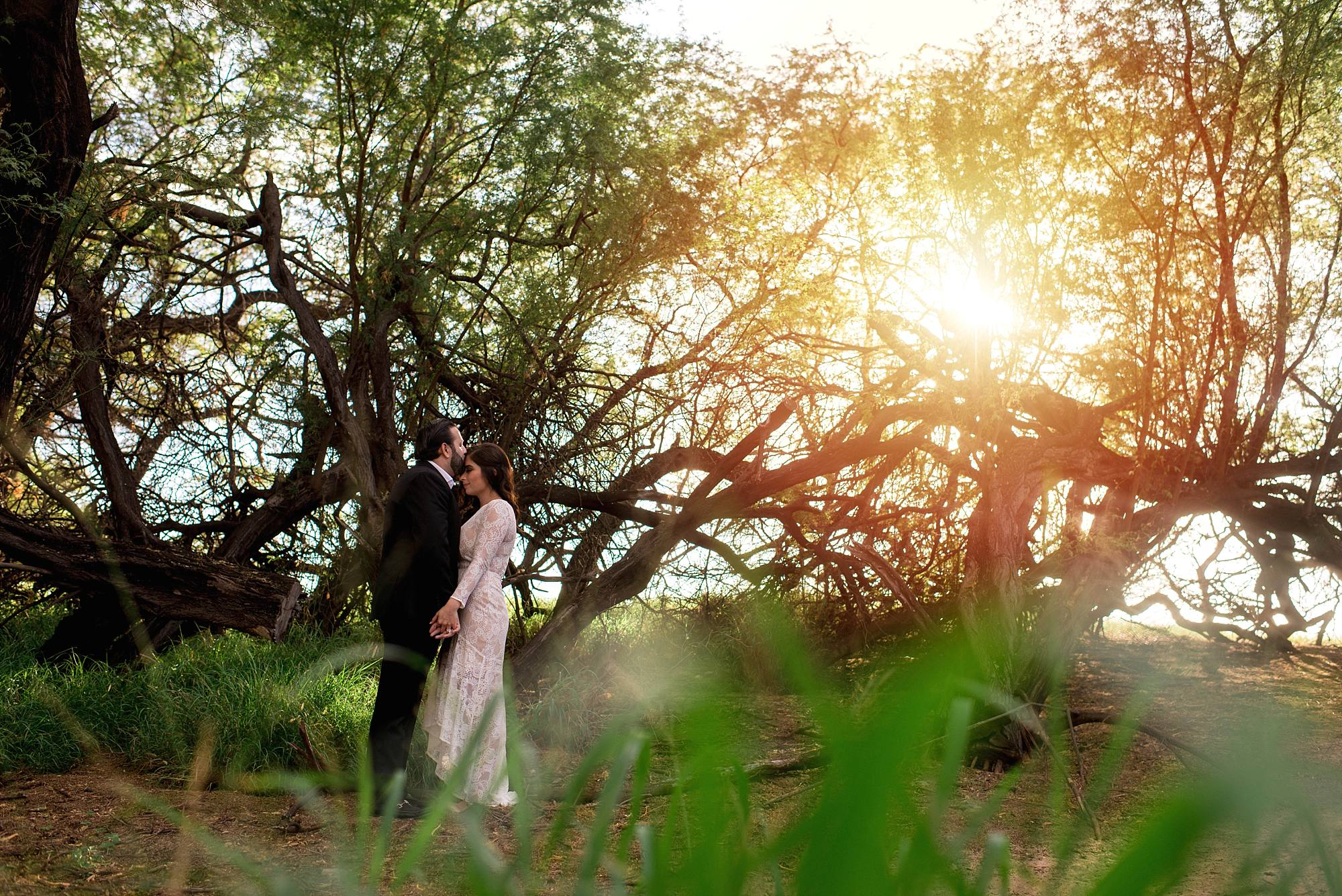 husband kissing wife's head under the golden sun and canopy of treey