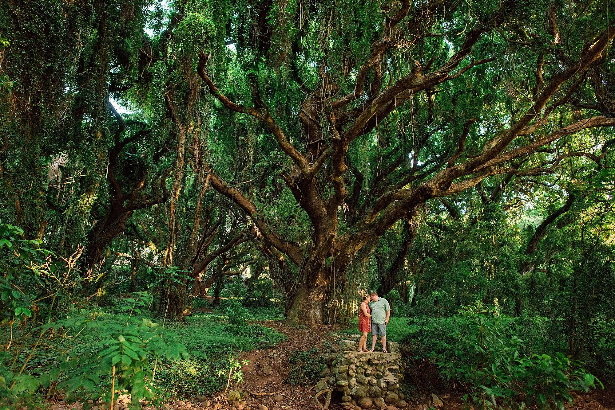 couple cuddling under banyon tree in maui, hawaii