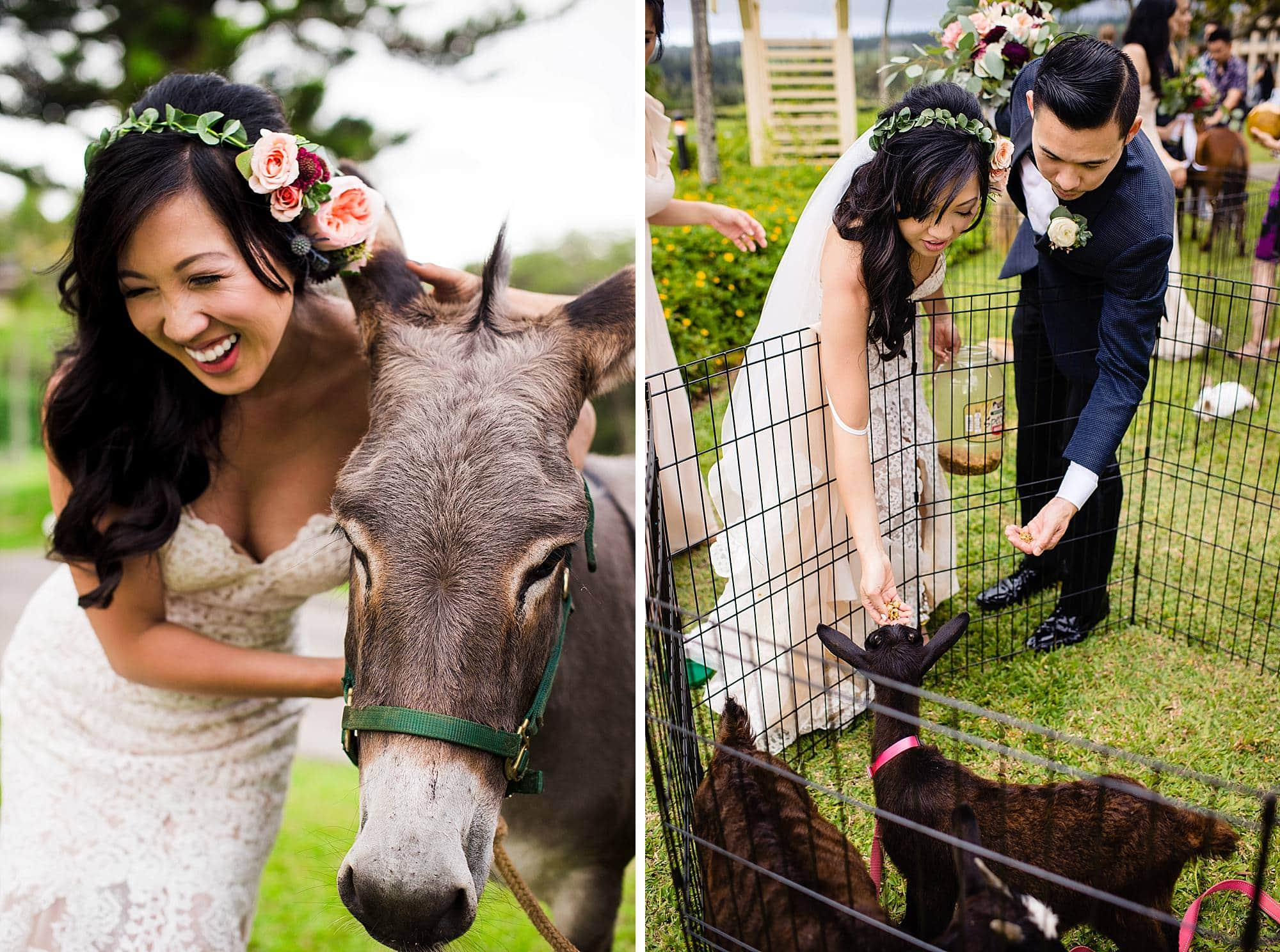 bridal portrait with donkey