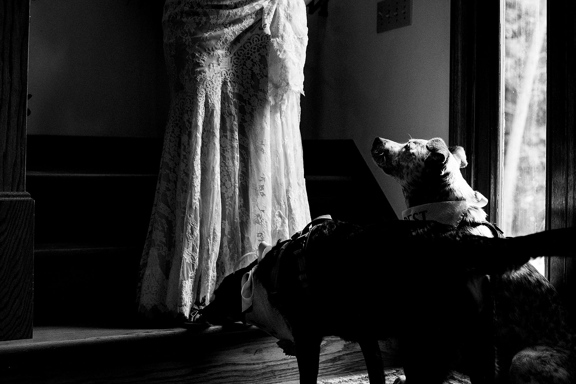 dogs seeing their bride for first time